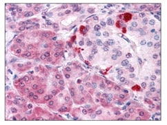 Immunohistochemistry (Formalin/PFA-fixed paraffin-embedded sections) - Anti-Malectin antibody (ab117574)