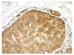 Immunohistochemistry (Formalin/PFA-fixed paraffin-embedded sections) - Anti-MSF antibody (ab117832)
