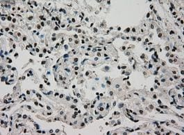 Immunohistochemistry (Formalin/PFA-fixed paraffin-embedded sections) - Anti-Glucokinase antibody [3E3] (ab117856)