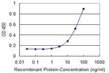 Sandwich ELISA - Anti-RPS8 antibody (ab118119)