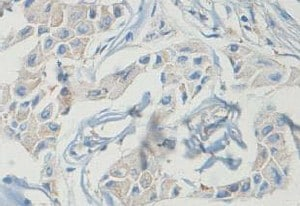 Immunohistochemistry (Formalin/PFA-fixed paraffin-embedded sections) - Anti-Isochorismatase domain-containing protein 1 antibody (ab118245)