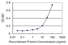 Sandwich ELISA - Anti-C6ORF199 antibody (ab118355)