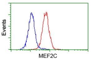 Flow Cytometry - MEF2C antibody [4B10] (ab118406)