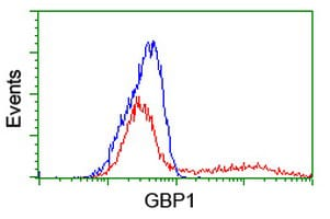 Flow Cytometry - Anti-GBP1 antibody [1B2] (ab119236)