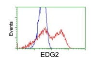 Flow Cytometry - Anti-EDG2 antibody [1G6] (ab119245)