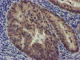 Immunohistochemistry (Formalin/PFA-fixed paraffin-embedded sections) - Anti-CHCHD5 antibody [4F3] (ab119428)