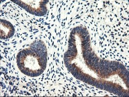 Immunohistochemistry (Formalin/PFA-fixed paraffin-embedded sections) - Anti-Aminopeptidase A [1C4] antibody (ab119798)