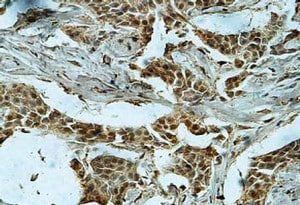 Immunohistochemistry (Formalin/PFA-fixed paraffin-embedded sections) - Anti-DUSP13 antibody (ab119926)