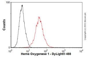 Flow Cytometry-Anti-Heme Oxygenase 1 antibody [GTS-1](ab12220)