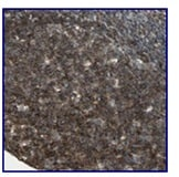 Immunohistochemistry (Formalin/PFA-fixed paraffin-embedded sections) - Anti-PLAGL2 antibody (ab121239)