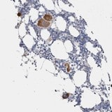 Immunohistochemistry (Formalin/PFA-fixed paraffin-embedded sections) - Anti-CNPY4 antibody (ab121855)