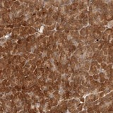 Immunohistochemistry (Formalin/PFA-fixed paraffin-embedded sections) - Anti-AHDC1 antibody (ab122009)