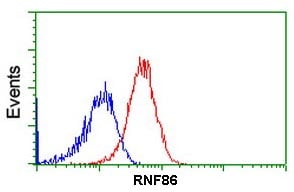 Flow Cytometry - Anti-RNF86 antibody [4E5] (ab123899)