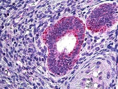 Immunohistochemistry (Formalin/PFA-fixed paraffin-embedded sections) - Anti-Phospholipase A2 antibody (ab124230)