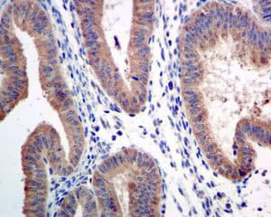 Immunohistochemistry (Formalin/PFA-fixed paraffin-embedded sections) - Anti-ARTS1 antibody [EPR6069] (ab124669)