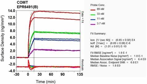 Other-Anti-COMT antibody [EPR6491(B)](ab124813)