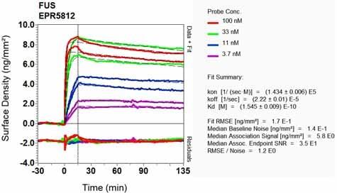 Other-Anti-TLS/FUS antibody [EPR5812](ab124923)