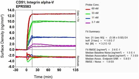 Other - Anti-Integrin alpha V antibody [EPR5583] (ab124968)