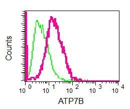 Flow Cytometry - Anti-ATP7b antibody [EPR6794] (ab124973)