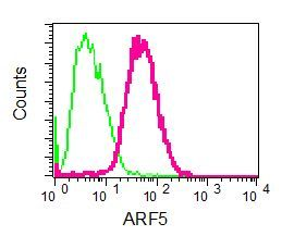 Flow Cytometry - Anti-ARF5 antibody [EPR7050] (ab125023)