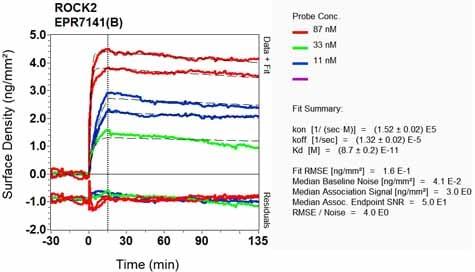 Other-Anti-ROCK2 antibody [EPR7141(B)](ab125025)