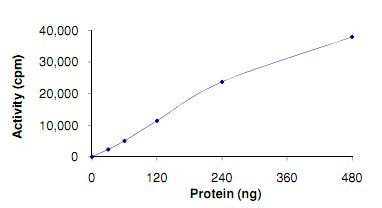 Functional Studies - TLK1 protein (Active) (ab125563)