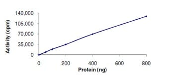 Functional Studies - STK25 protein (Active) (ab125588)