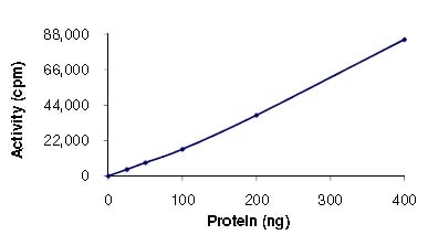 Functional Studies - MSK2 / RSK-B protein (Active) (ab125610)