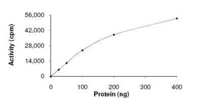 Functional Studies - MNK1 protein (Active) (ab125635)