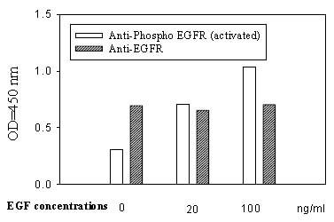 In-Cell ELISA - EGFR Human In-Cell ELISA Kit (ab126419)