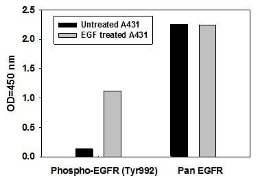 Sandwich ELISA - EGFR (pY992) + total EGFR Human ELISA Kit (ab126443)