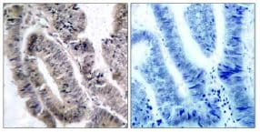 Immunohistochemistry (Formalin/PFA-fixed paraffin-embedded sections) - Anti-AMPK alpha 1 (phospho S487) antibody (ab131357)