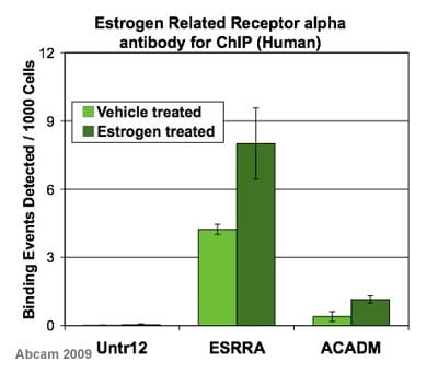 ChIP - Estrogen Related Receptor alpha antibody - ChIP Grade (ab16363)