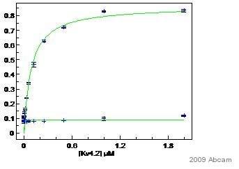 ELISA - Kv4.2 antibody (ab16719)