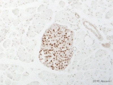 Immunohistochemistry (Formalin/PFA-fixed paraffin-embedded sections) - MAFA antibody - ChIP Grade (ab17976)