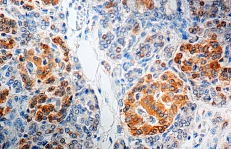 Immunohistochemistry (Formalin/PFA-fixed paraffin-embedded sections) - Anti-GAD65 antibody - Neuronal Marker (ab2348)