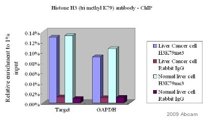 ChIP - Histone H3 (tri methyl K79) antibody - ChIP Grade (ab2621)