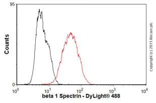 Flow Cytometry-Anti-beta 1 Spectrin antibody [4C3](ab2808)