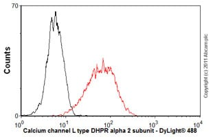 Flow Cytometry-Calcium channel L type DHPR alpha 2 subunit antibody [20A](ab2864)