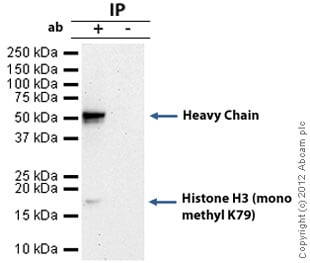 Immunoprecipitation - Anti-Histone H3 (mono methyl K79) antibody - ChIP Grade (ab2886)