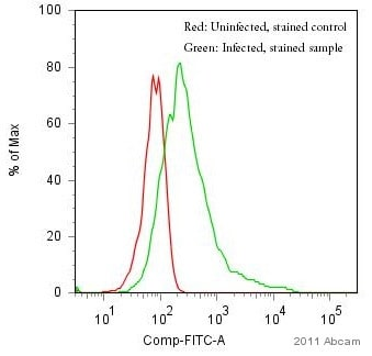 Flow Cytometry - Anti-Influenza A Virus Nucleoprotein antibody [431] (FITC) (ab20921)