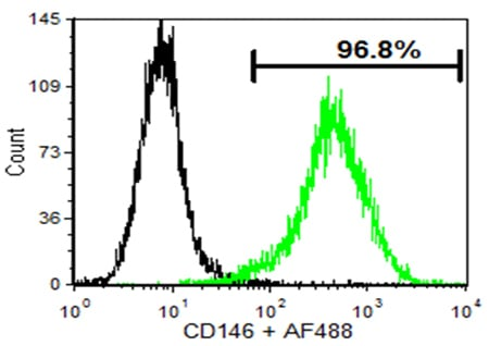 Flow Cytometry - Anti-CD146 antibody [P1H12] (ab24577)