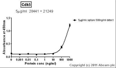 Sandwich ELISA - Cdk5 antibody [2G2] (ab28441)