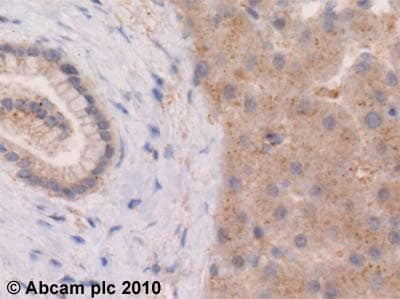 Immunohistochemistry (Formalin/PFA-fixed paraffin-embedded sections) - Anti-Lubricin antibody (ab28484)