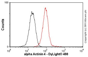 Flow Cytometry - alpha Actinin 4 antibody [7H6] (ab32816)