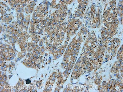 Immunohistochemistry (Formalin/PFA-fixed paraffin-embedded sections) - Anti-eEF1B2 antibody (ab37725)