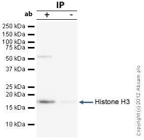 Immunoprecipitation - Anti-Histone H3 antibody - ChIP Grade (ab46765)