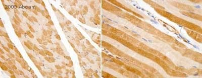 Immunohistochemistry (Formalin/PFA-fixed paraffin-embedded sections) - Anti-Lactate Dehydrogenase antibody (ab47010)