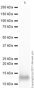 Western blot - Active human Activin B full length protein (ab50052)