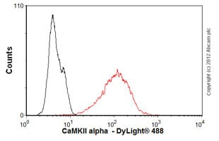 Flow Cytometry-Anti-CaMKII alpha  antibody(ab54925)